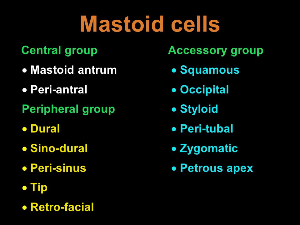 Mastoid cells Central group Accessory group