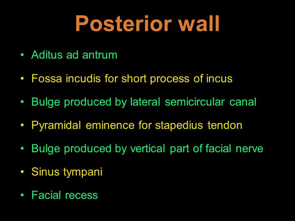 Posterior wall Aditus ad antrum