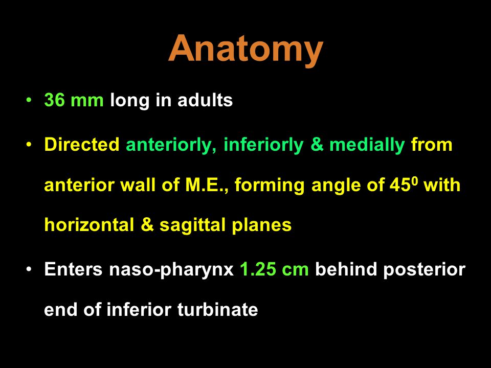 Anatomy 36 mm long in adults