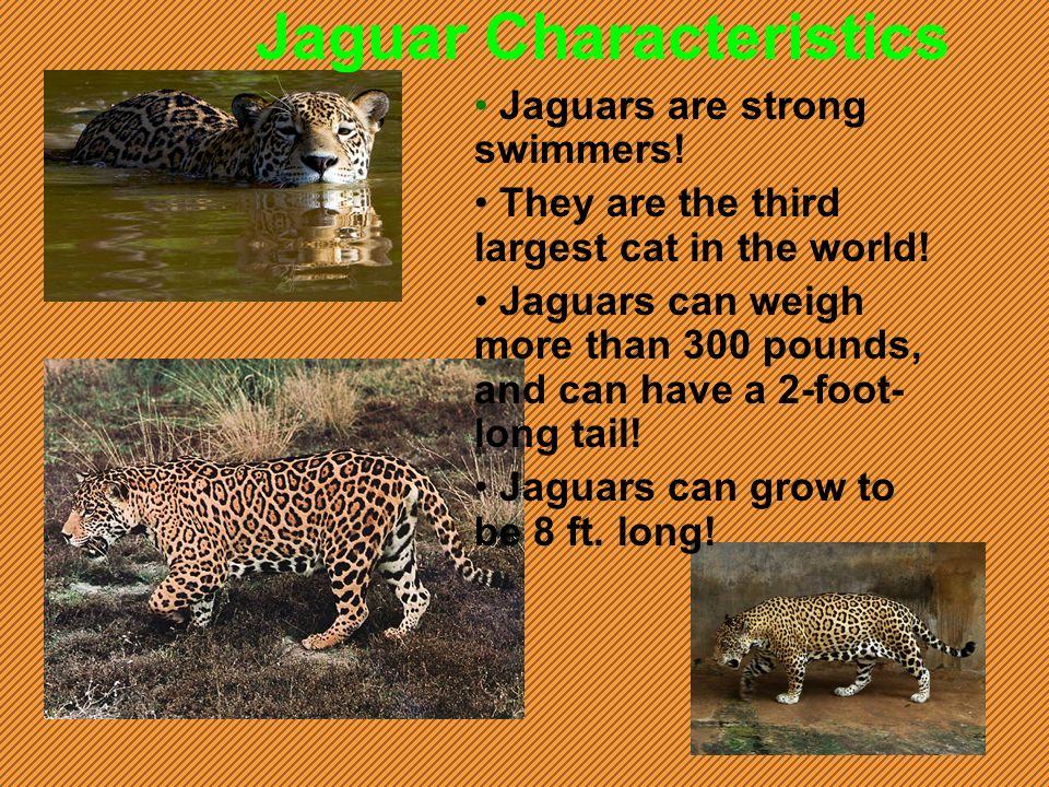 Jaguar Characteristics