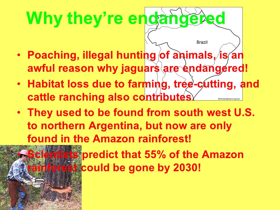 Why they're endangered