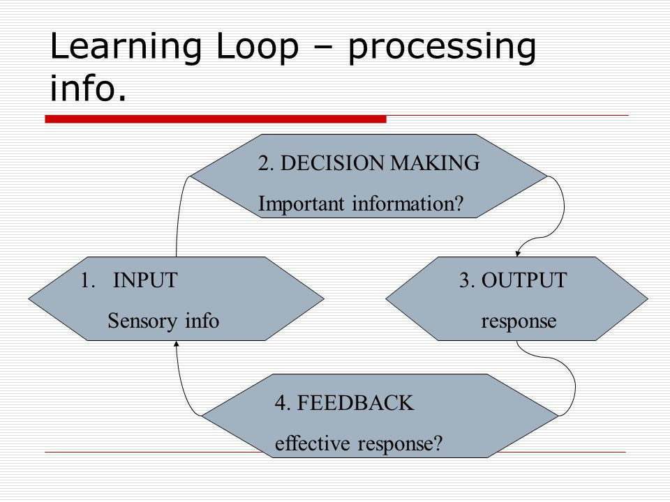 Learning Loop – processing info.