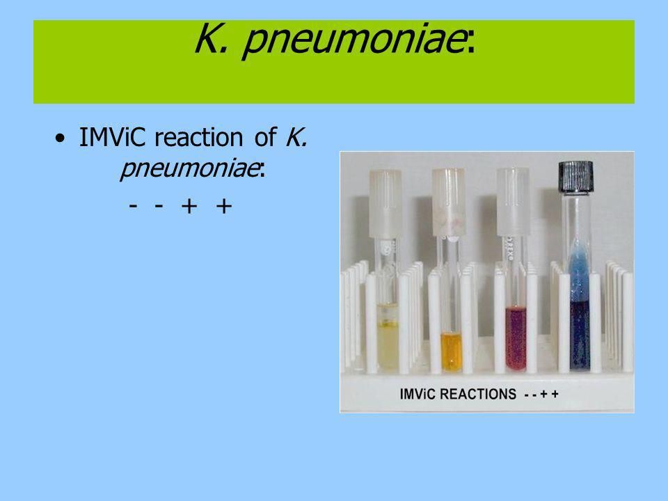 IMViC reaction of K. pneumoniae: