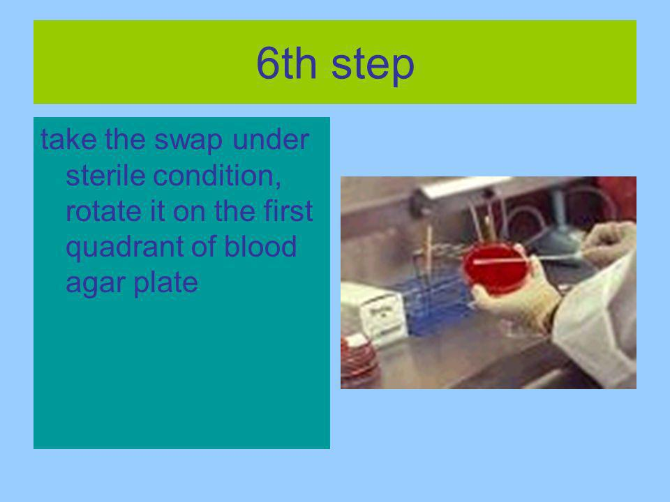 6th step take the swap under sterile condition, rotate it on the first quadrant of blood agar plate