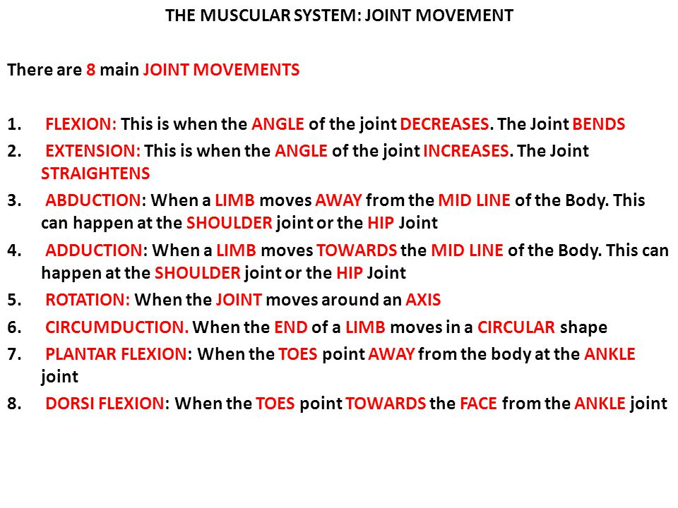 THE MUSCULAR SYSTEM: JOINT MOVEMENT