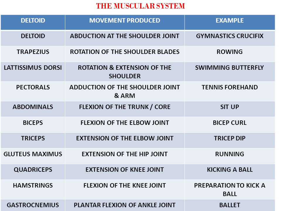 THE MUSCULAR SYSTEM DELTOID MOVEMENT PRODUCED EXAMPLE
