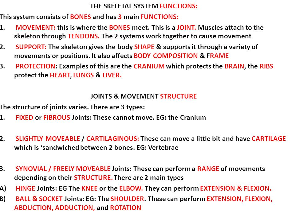 THE SKELETAL SYSTEM FUNCTIONS: JOINTS & MOVEMENT STRUCTURE