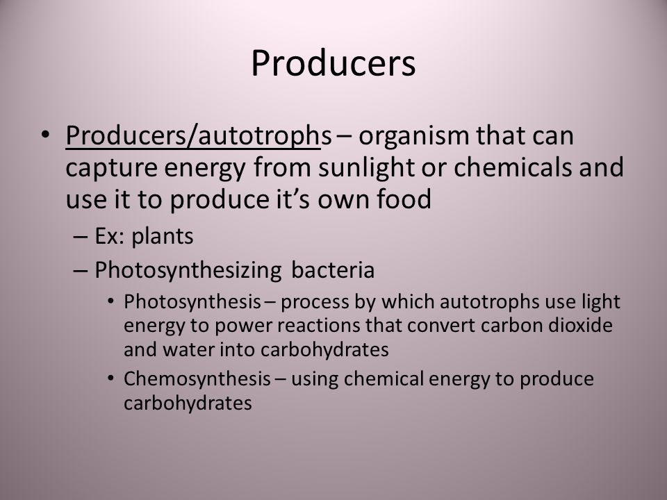 Producers Producers/autotrophs – organism that can capture energy from sunlight or chemicals and use it to produce it's own food.