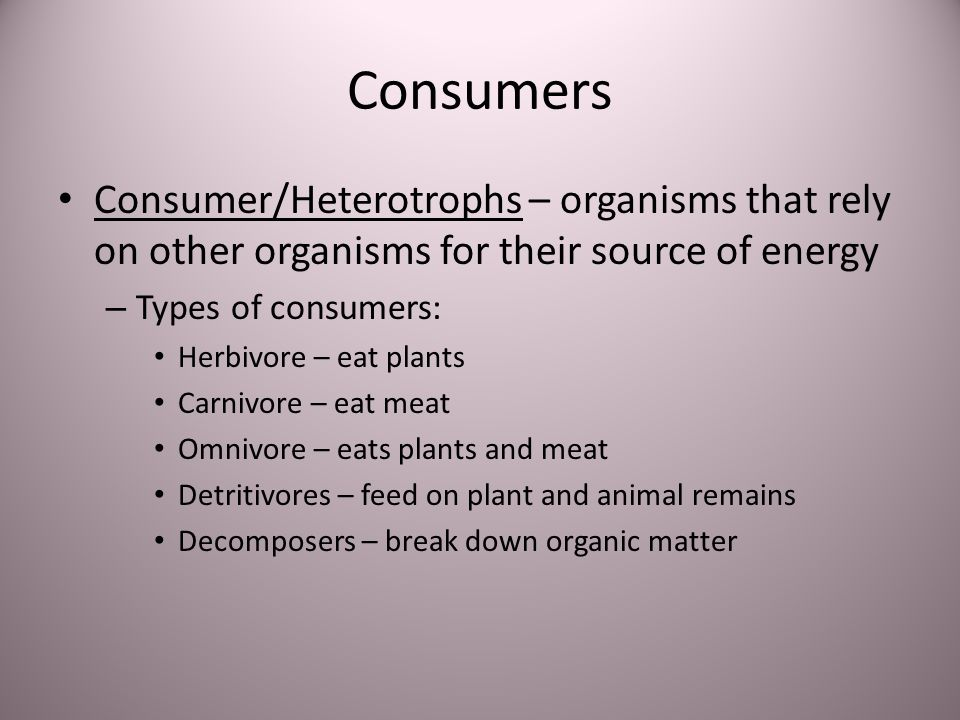Consumers Consumer/Heterotrophs – organisms that rely on other organisms for their source of energy.