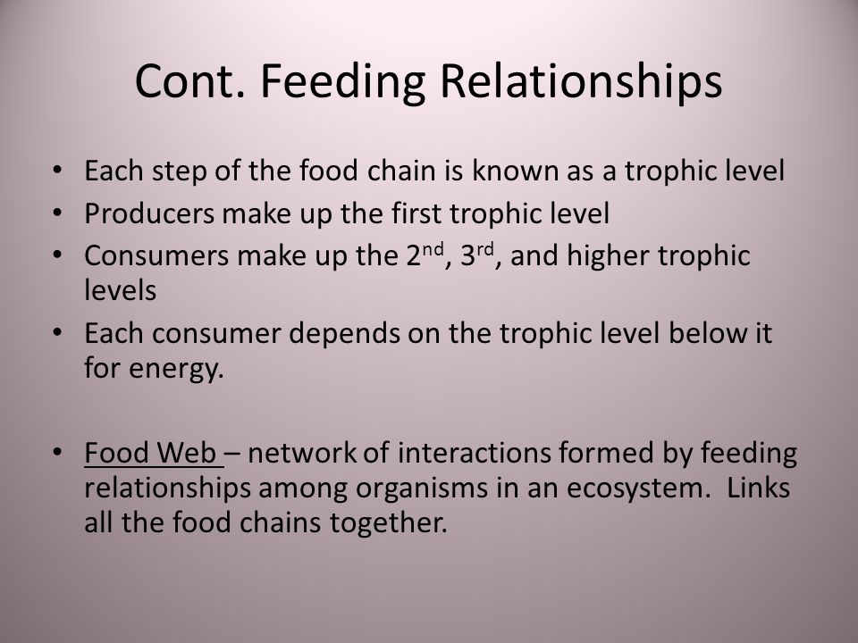 Cont. Feeding Relationships