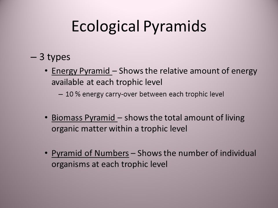 Ecological Pyramids 3 types