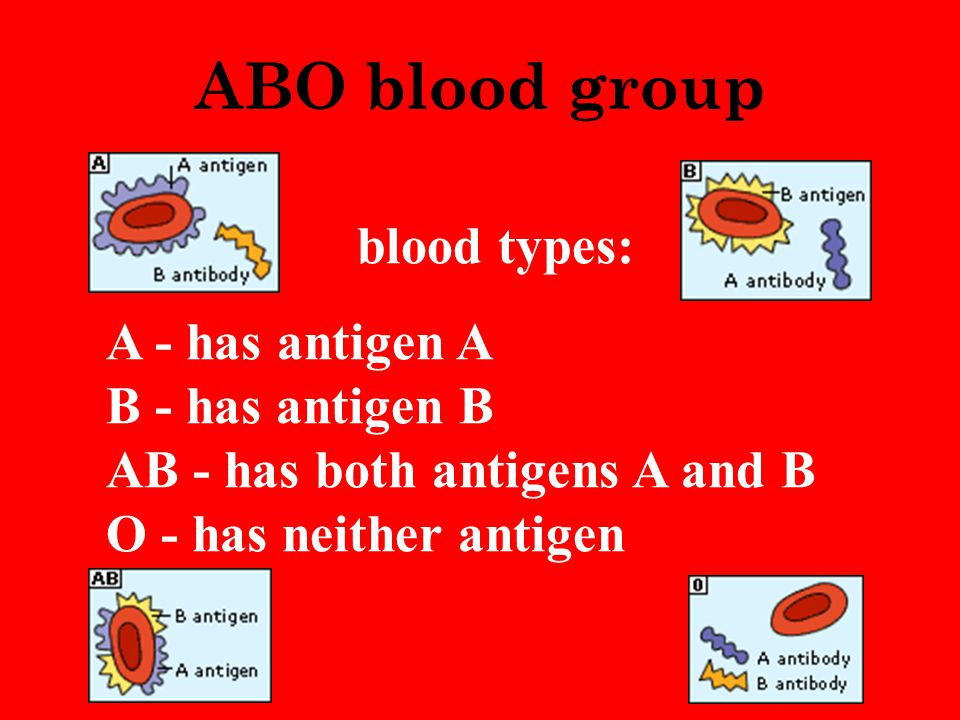 ABO blood group blood types: