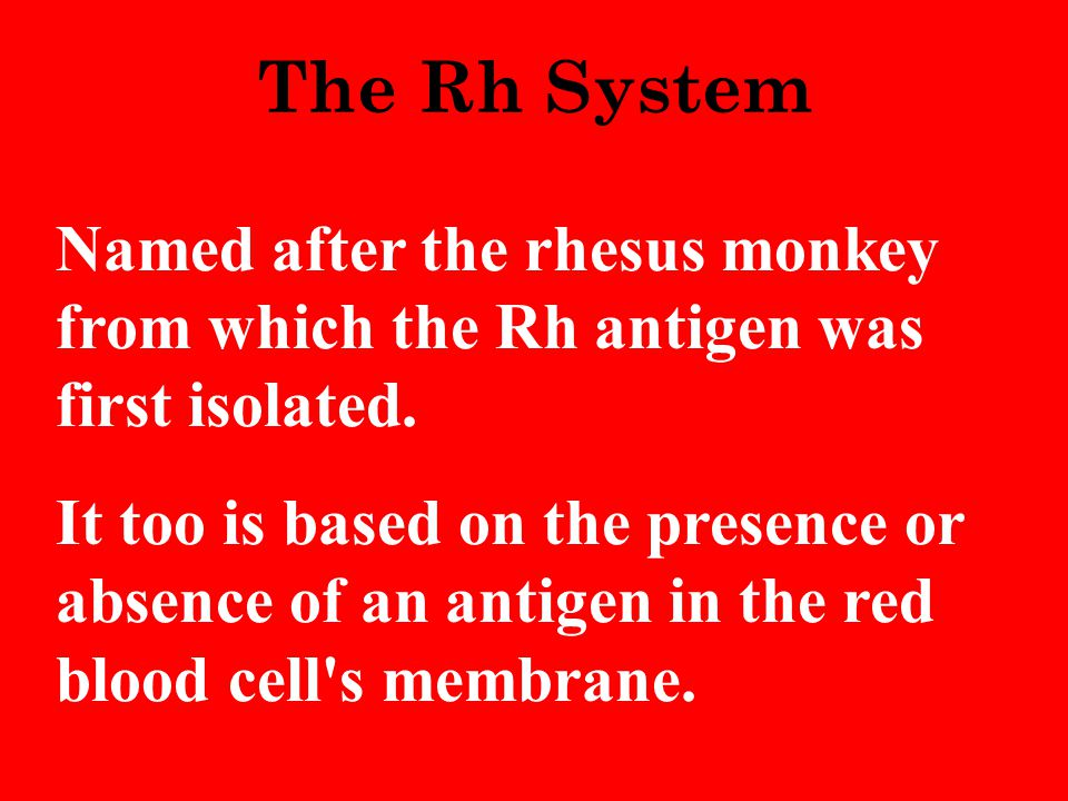 The Rh System Named after the rhesus monkey from which the Rh antigen was first isolated.