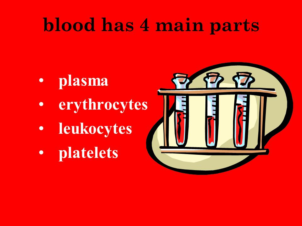 blood has 4 main parts plasma erythrocytes leukocytes platelets