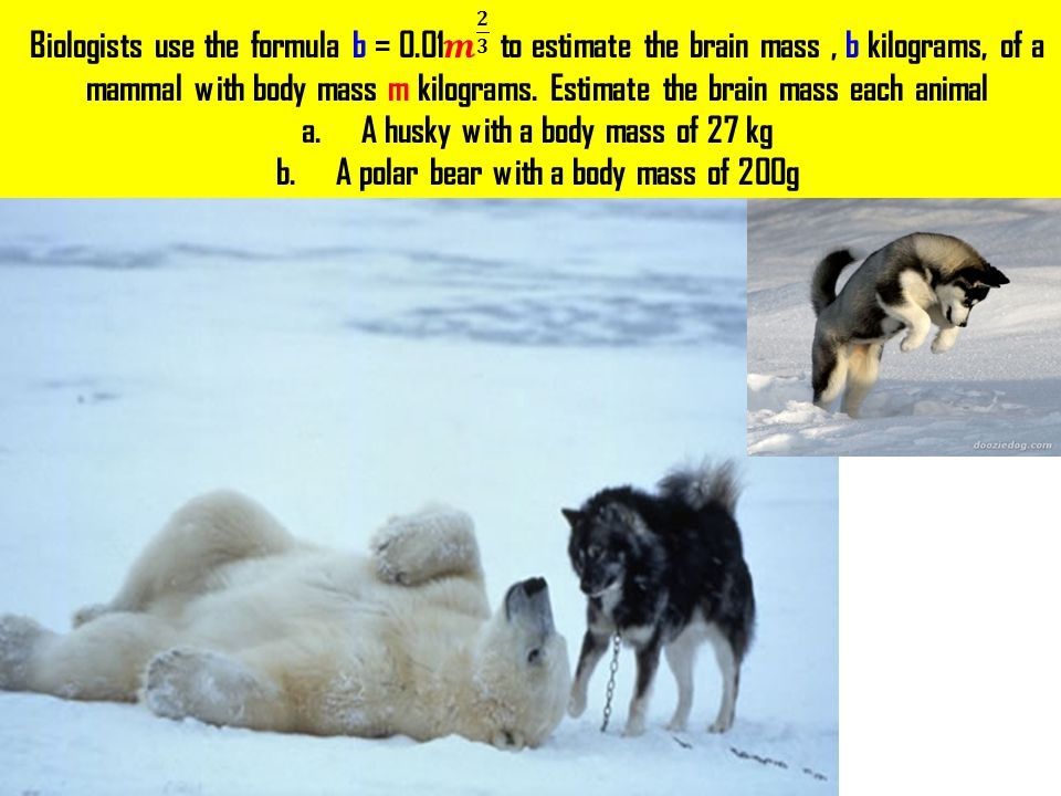 A husky with a body mass of 27 kg