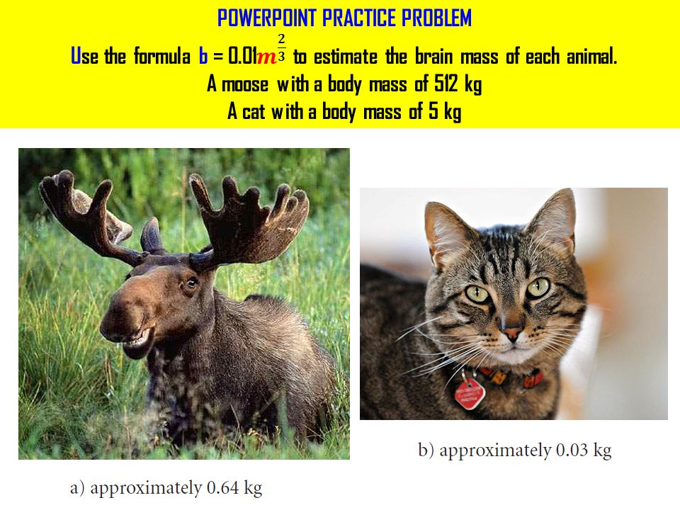 POWERPOINT PRACTICE PROBLEM Use the formula b = 0