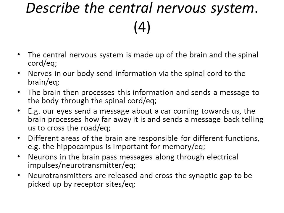 Describe the central nervous system. (4)