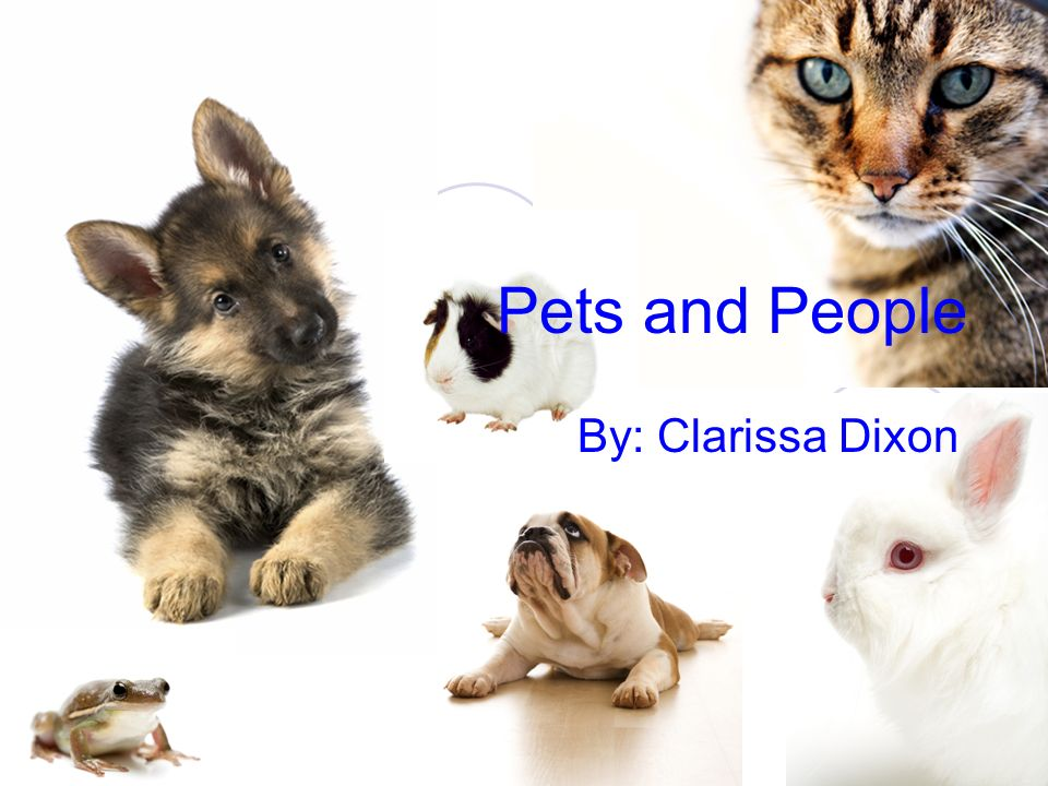 Pets and People By: Clarissa Dixon