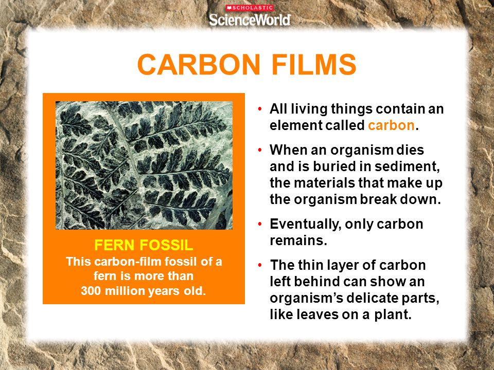 CARBON FILMS FERN FOSSIL This carbon-film fossil of a fern is more than 300 million years old. All living things contain an element called carbon.