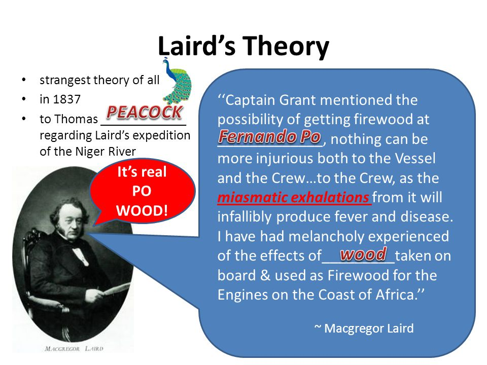 Laird's Theory PEACOCK Fernando Po wood