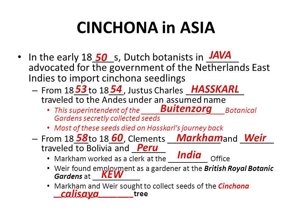 CINCHONA in ASIA JAVA 50 53 54 HASSKARL Buitenzorg 58 60 Markham Weir