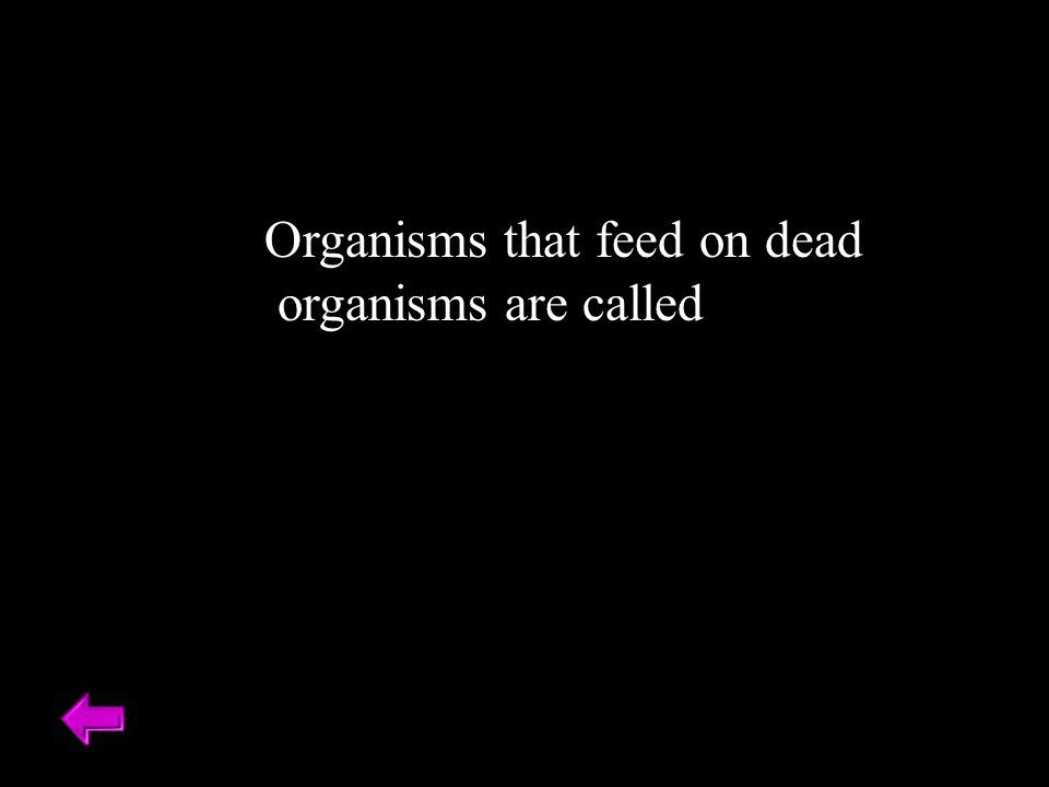 Organisms that feed on dead