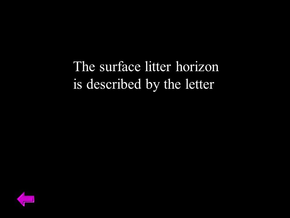 The surface litter horizon