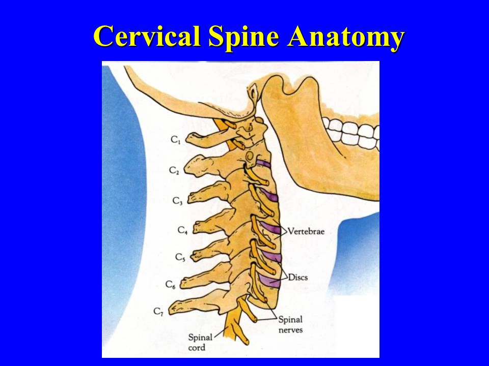 Cervical Spine Anatomy
