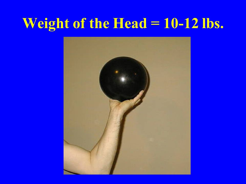 Weight of the Head = 10-12 lbs.