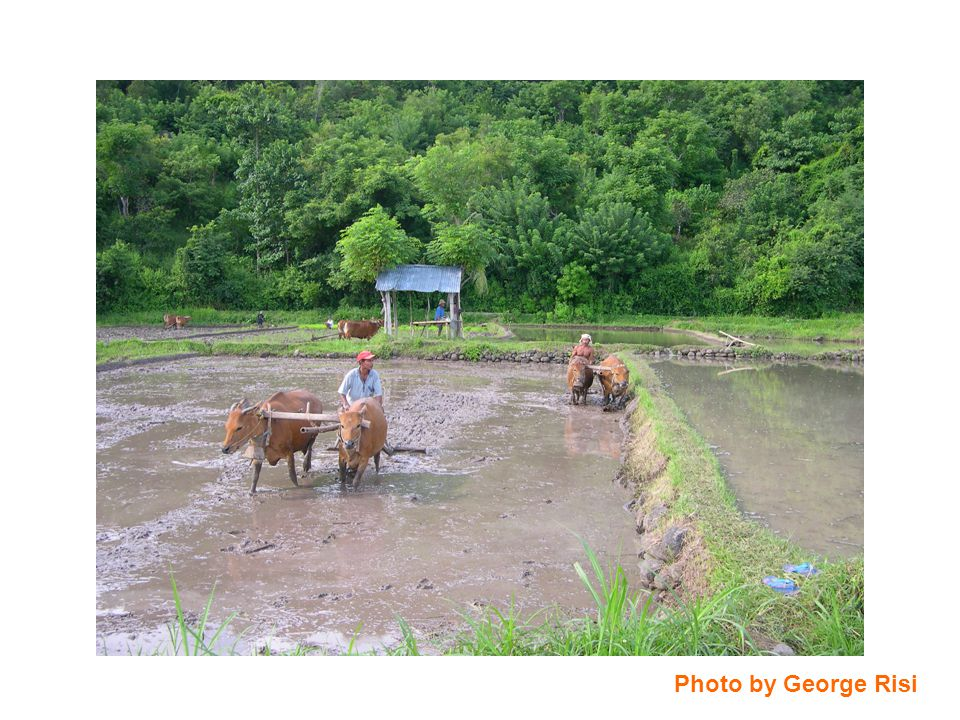 Cattle May Serve to Modulate JE Activity