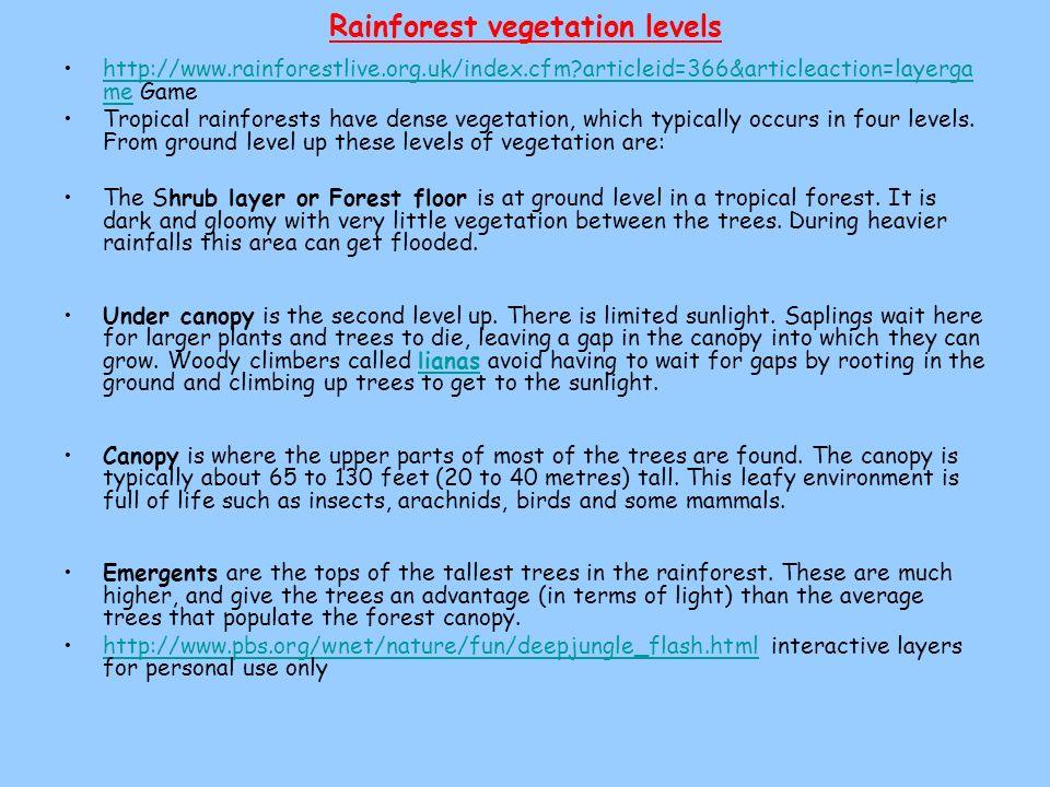 Rainforest vegetation levels