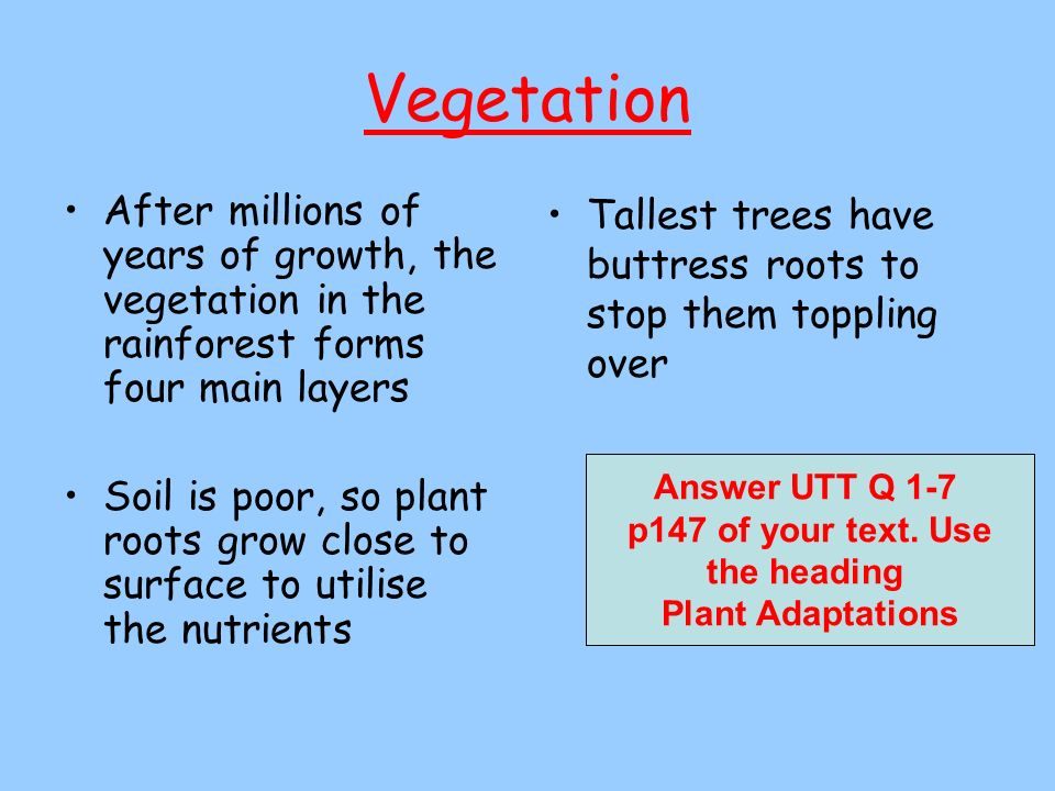 VegetationAfter millions of years of growth, the vegetation in the rainforest forms four main layers.