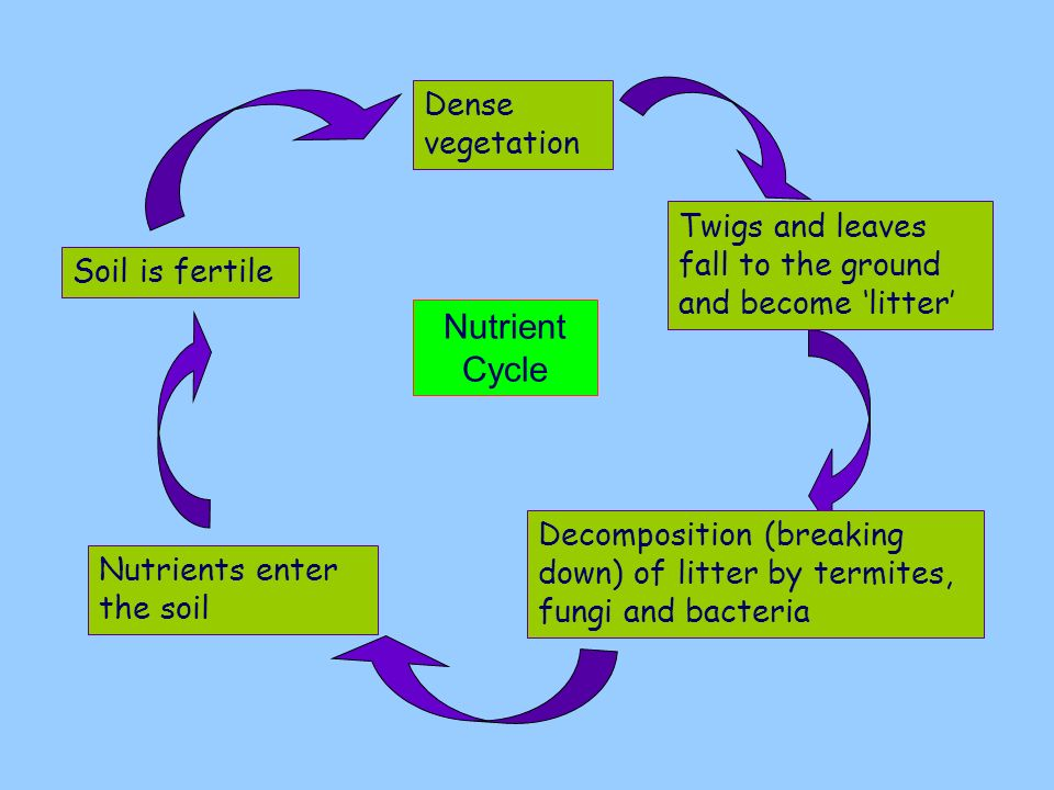 Nutrient Cycle Dense vegetation
