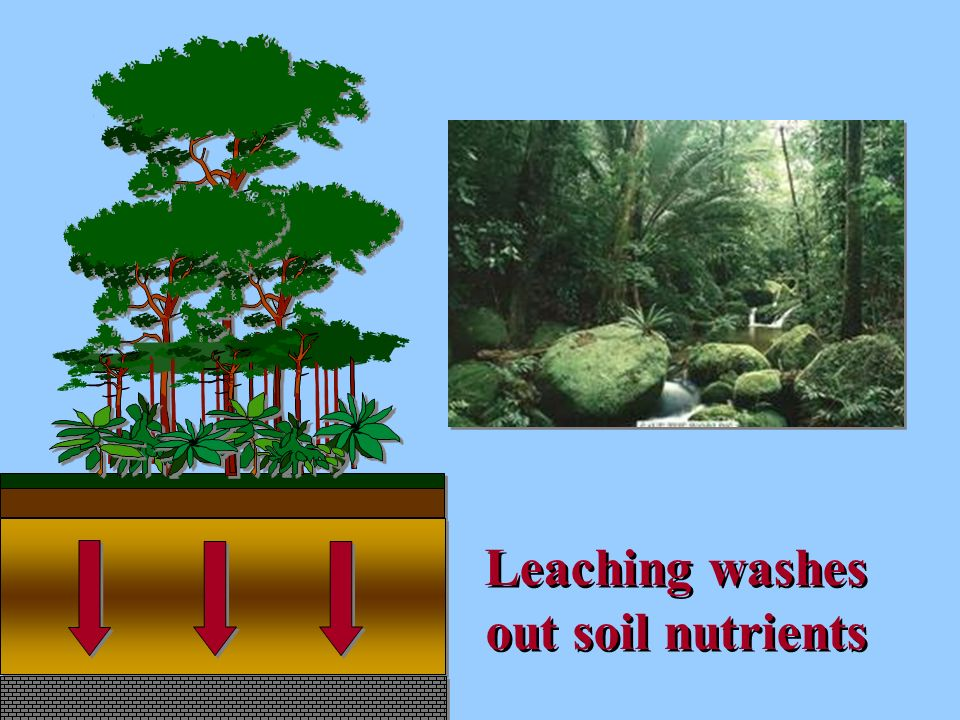 Leaching washes out soil nutrients
