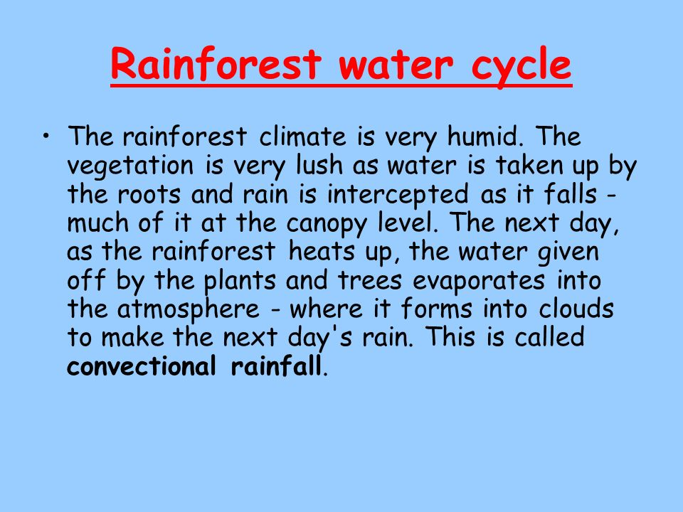 Rainforest water cycle