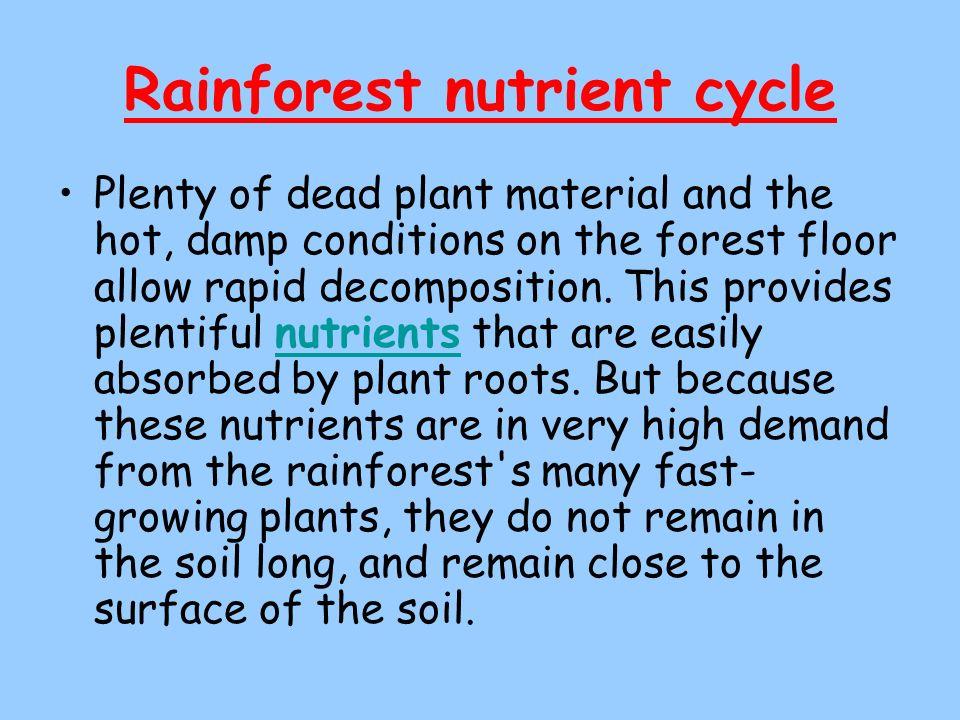 Rainforest nutrient cycle