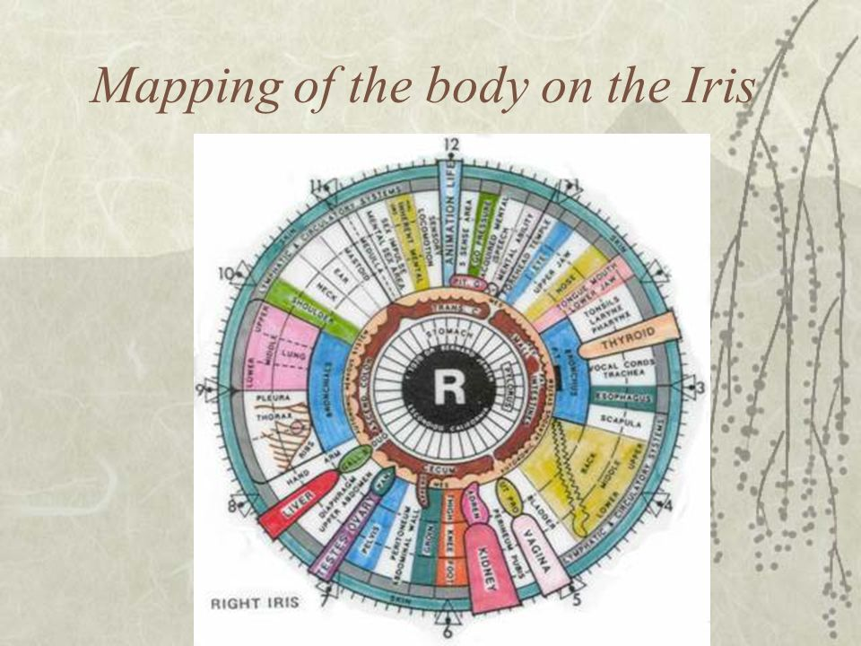Mapping of the body on the Iris