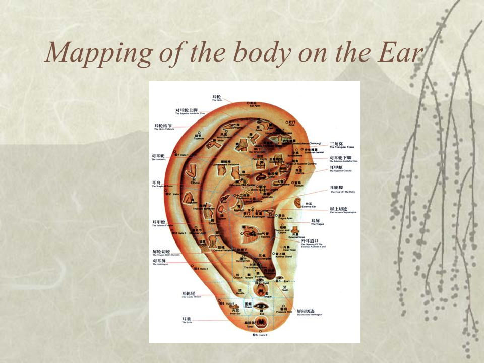Mapping of the body on the Ear