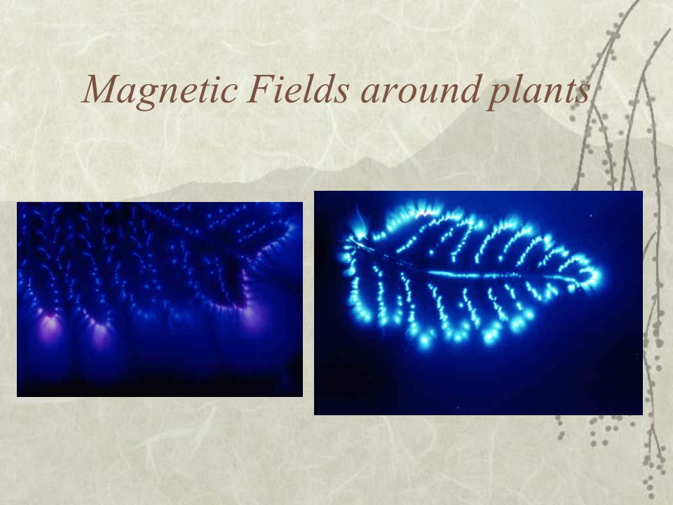 Magnetic Fields around plants