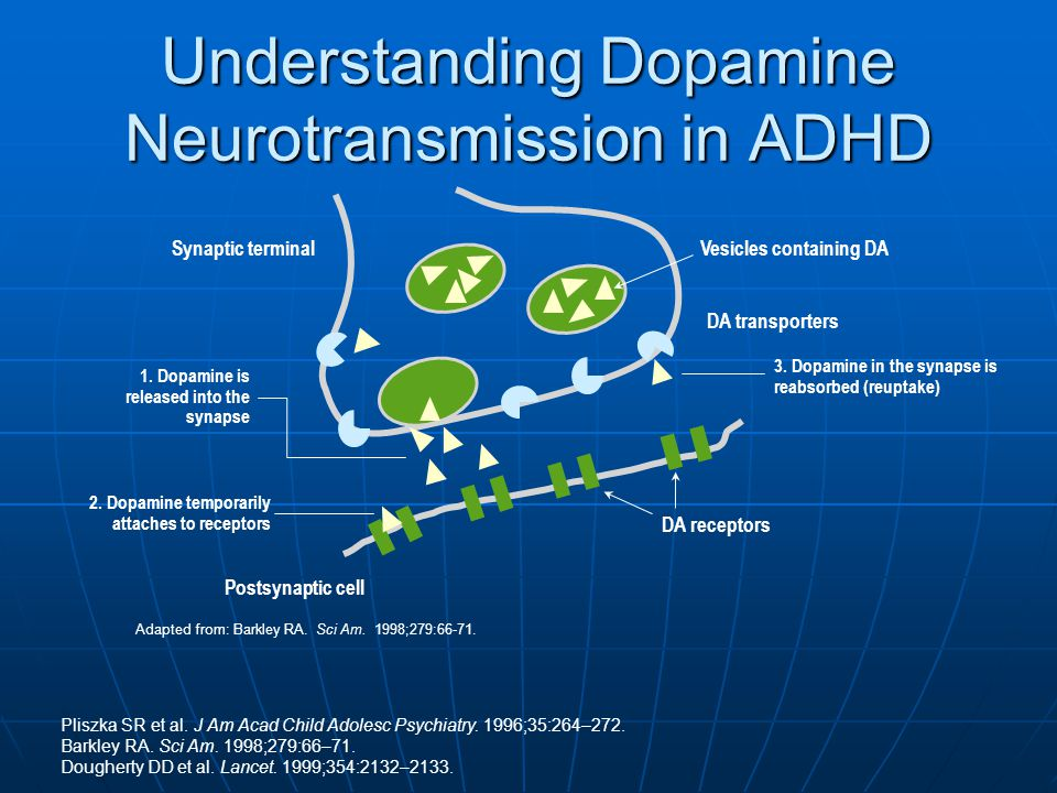 Understanding Dopamine Neurotransmission in ADHD
