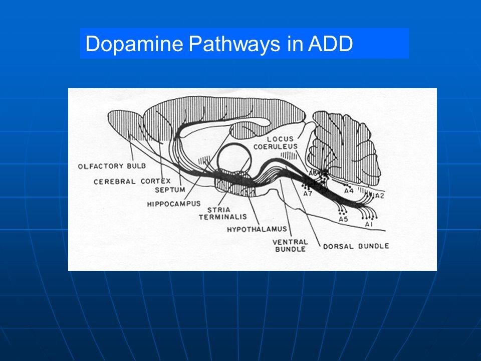 Dopamine Pathways in ADD