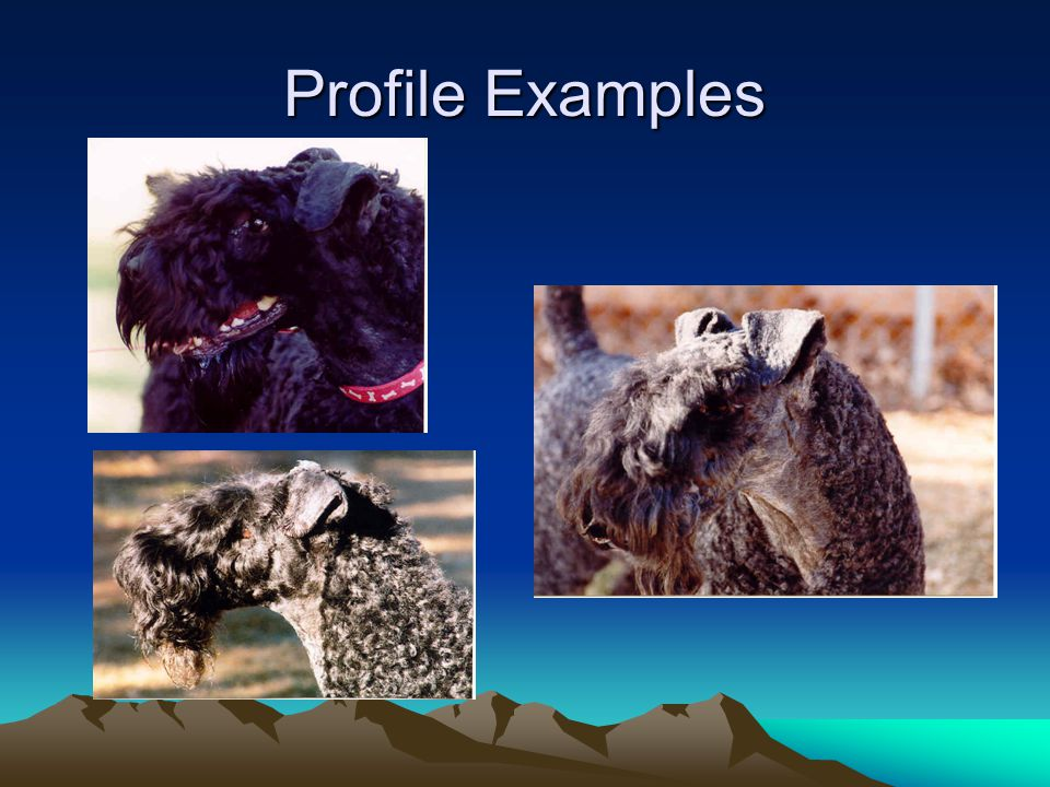 Profile Examples