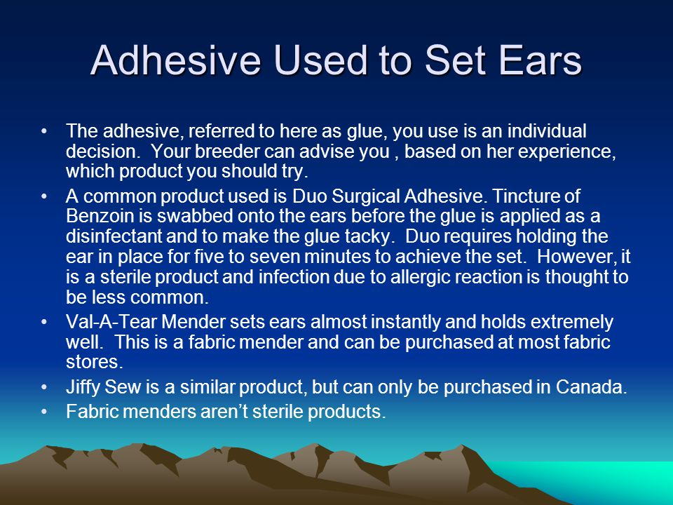 Adhesive Used to Set Ears