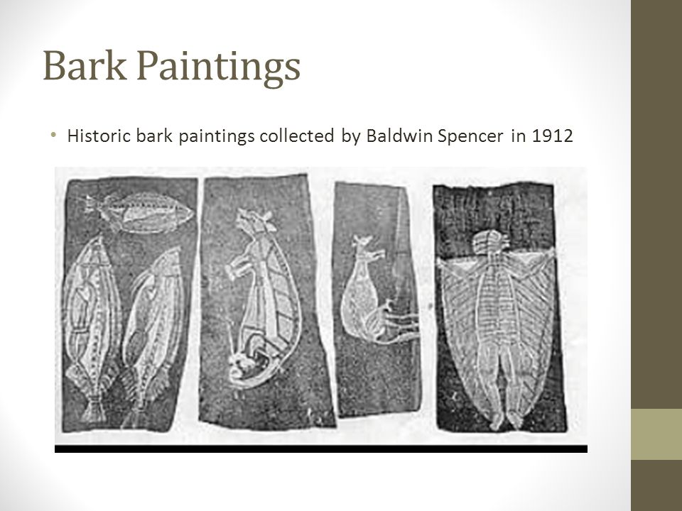 Bark Paintings Historic bark paintings collected by Baldwin Spencer in 1912