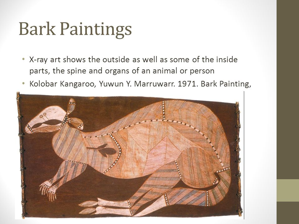 Bark Paintings X-ray art shows the outside as well as some of the inside parts, the spine and organs of an animal or person.