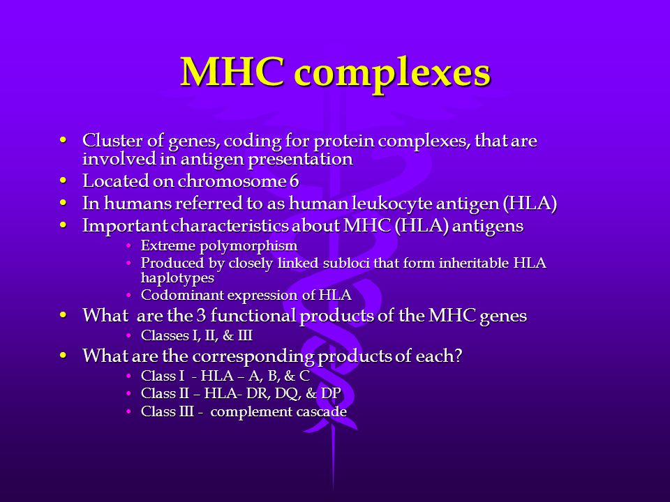 MHC complexes Cluster of genes, coding for protein complexes, that are involved in antigen presentation.