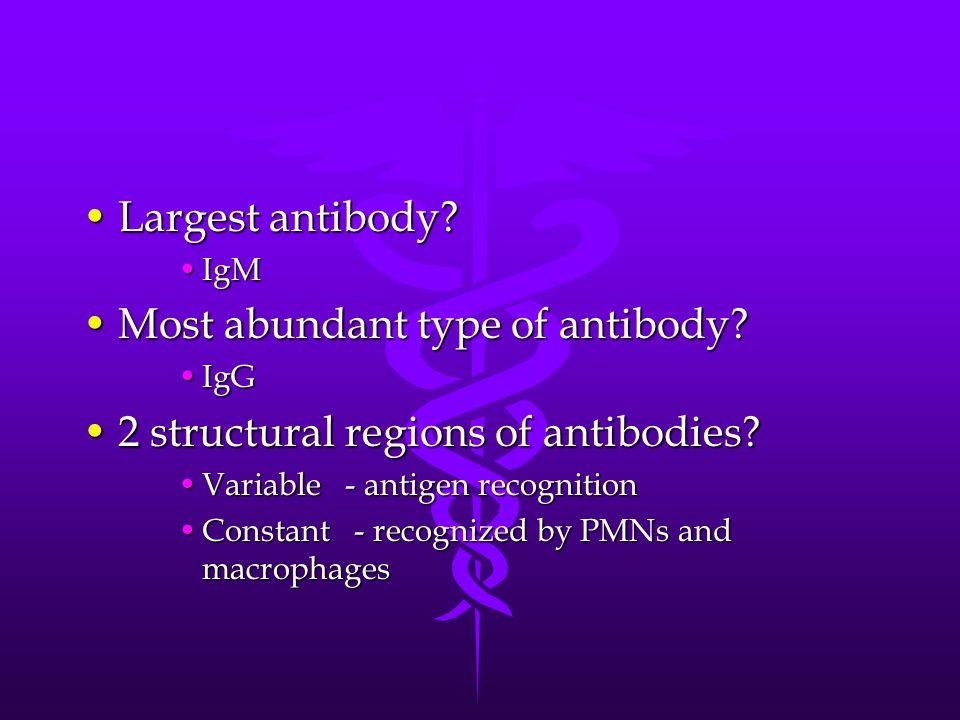 Most abundant type of antibody 2 structural regions of antibodies