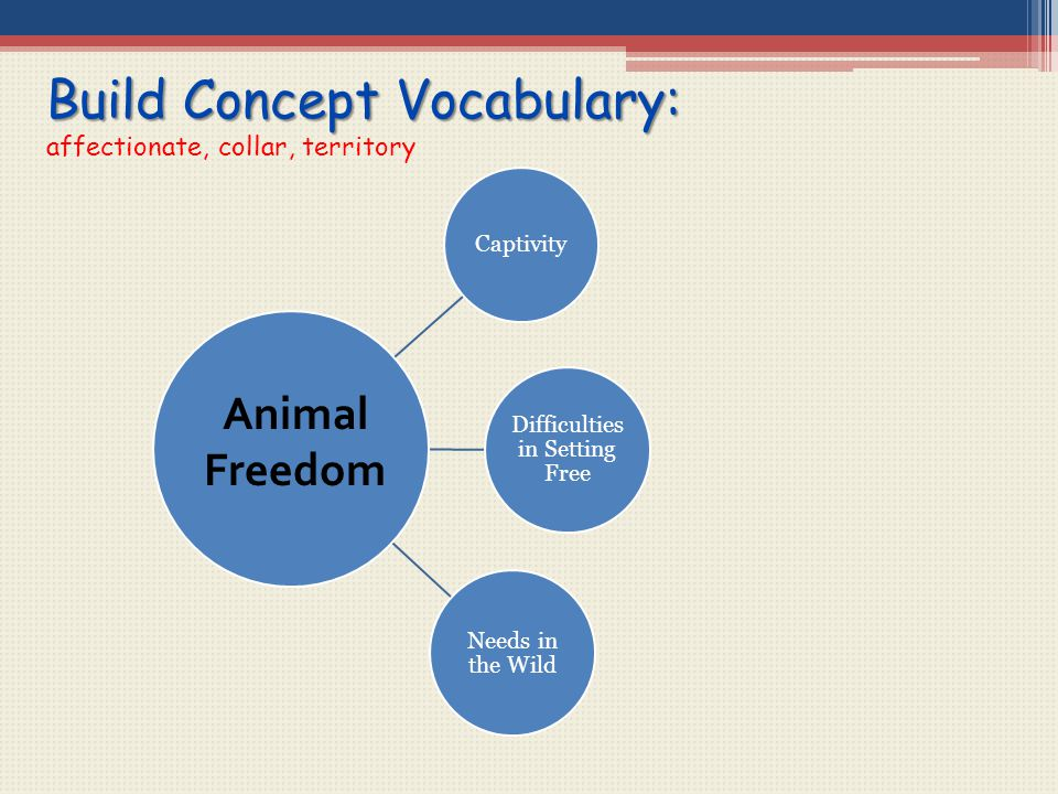 Build Concept Vocabulary: affectionate, collar, territory