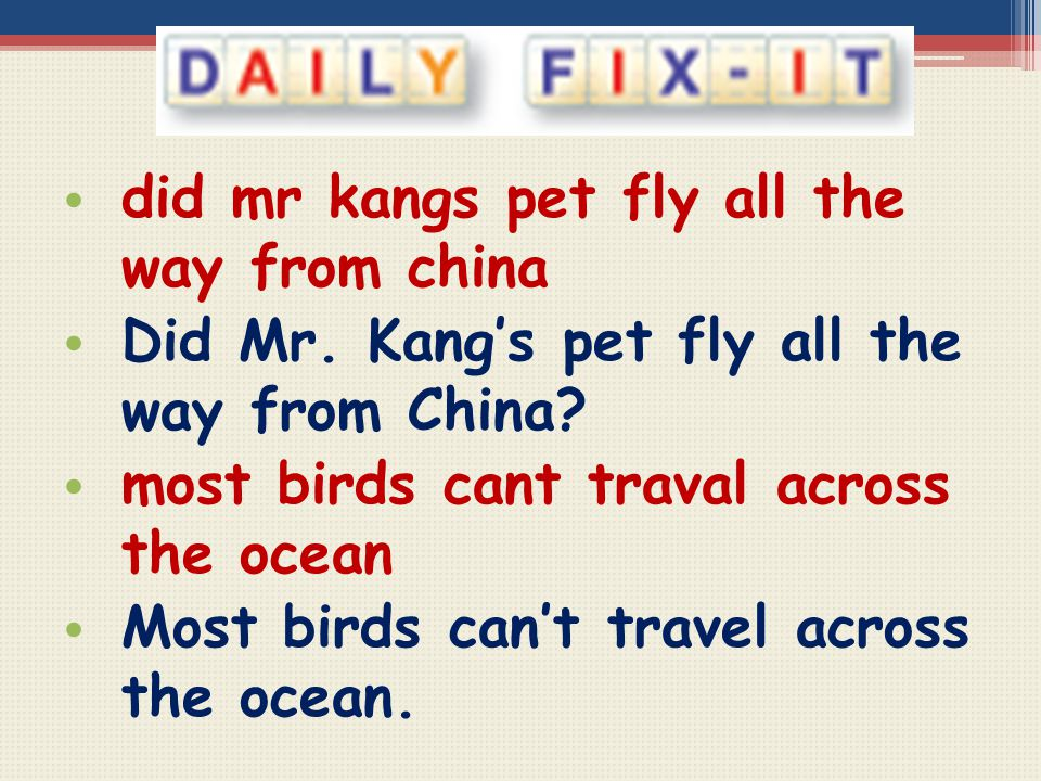 did mr kangs pet fly all the way from china