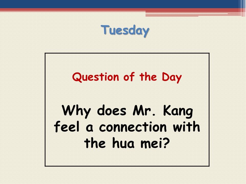 Why does Mr. Kang feel a connection with the hua mei